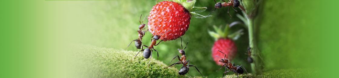 home-mieren