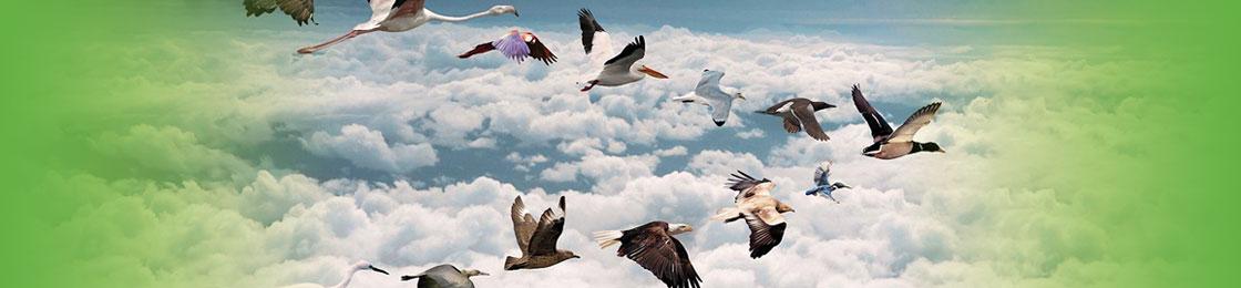 home-vogels